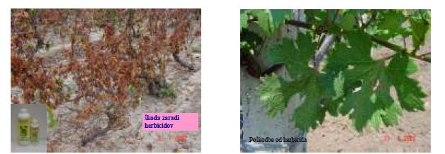 šteta od herbicida