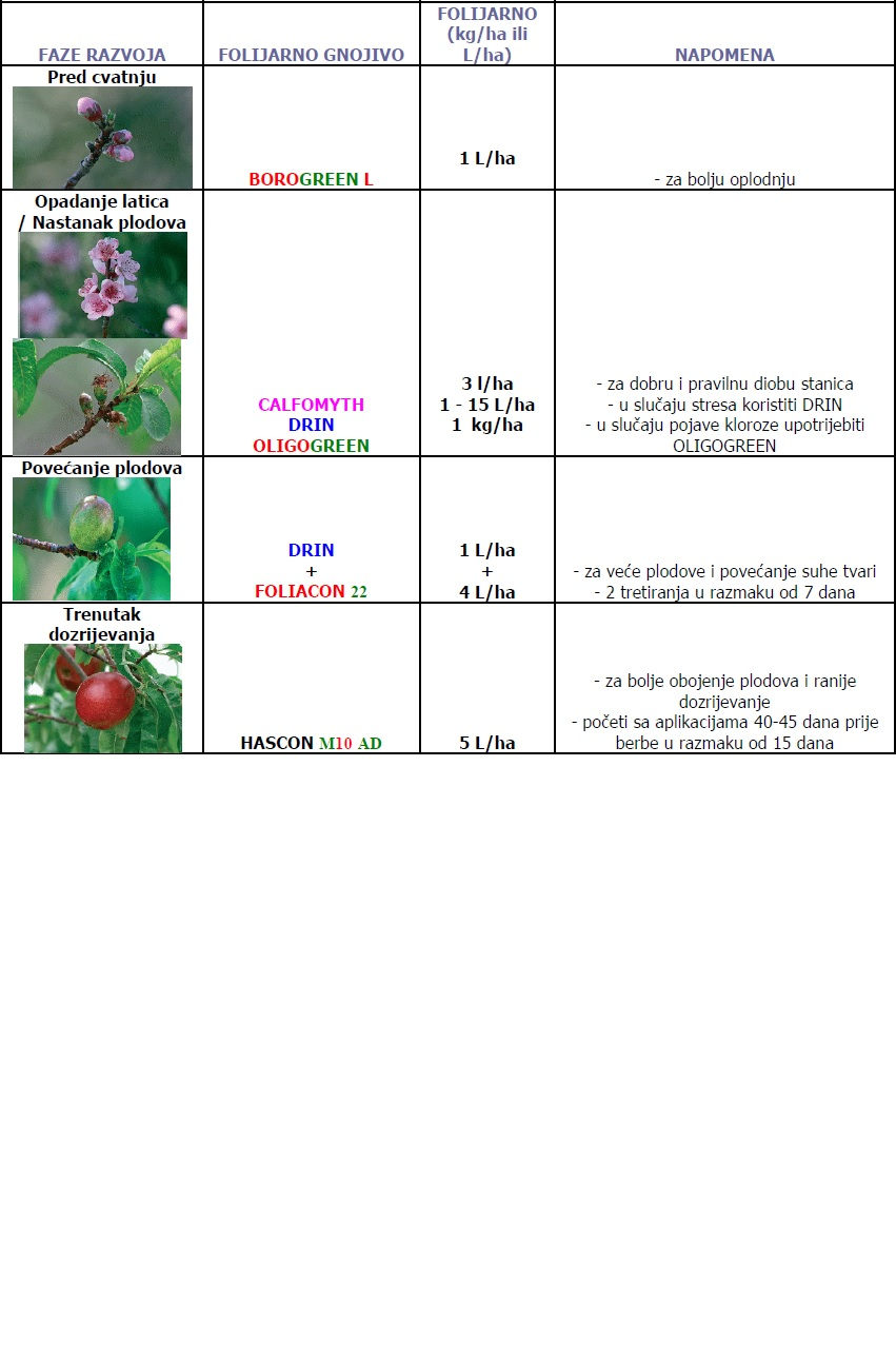 breskva i nektarina
